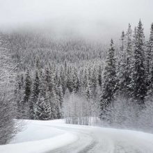YOU'RE NOT AN ICE ROAD TRUCKER AND YOU DO NEED WINTER TYRES